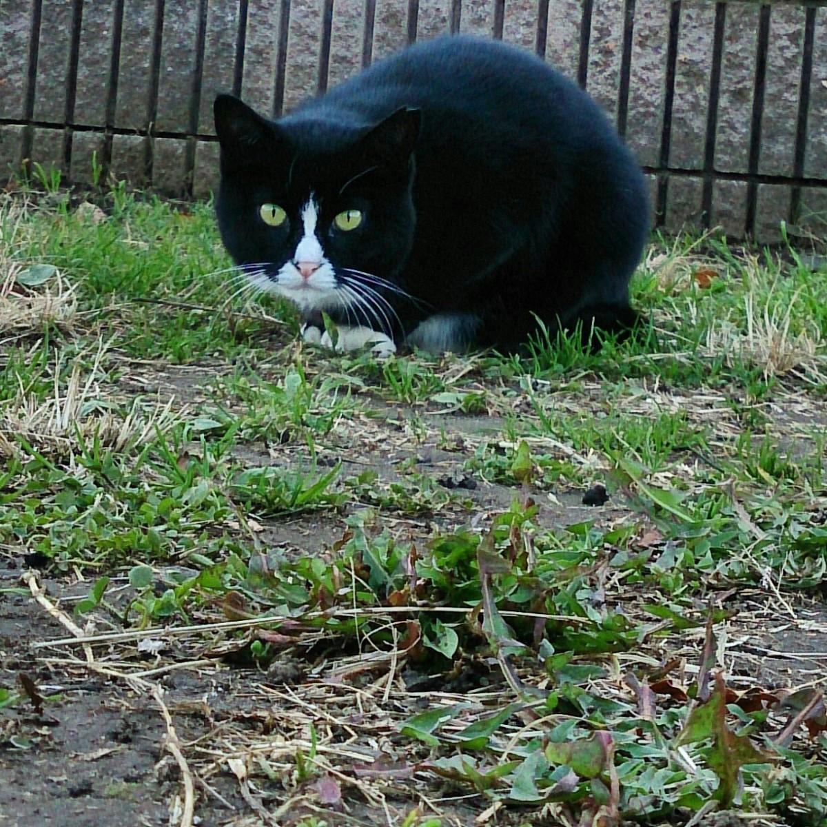 ワイルド,育つ,外猫,画像,002