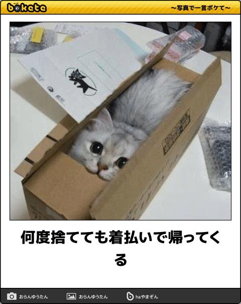 爆笑,可愛く,おもしろい,猫,bokete,画像003