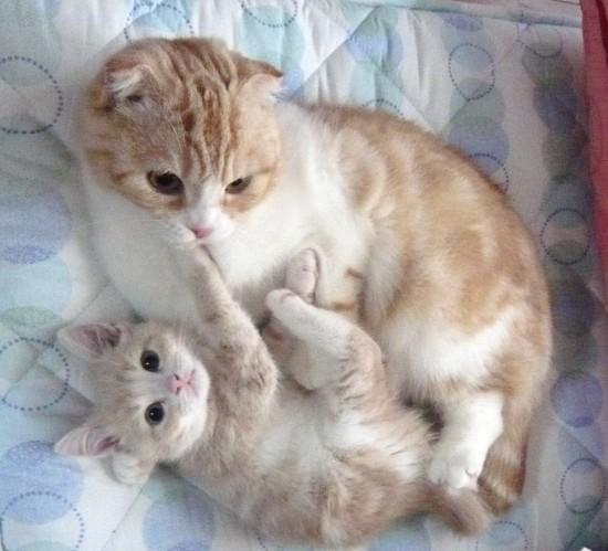 にやけちゃう,可愛い,猫パンチ,画像003