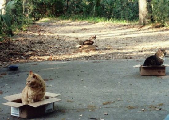 狭い所,大好き,猫,画像003