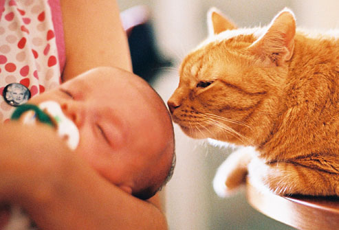 癒されたい,必見,赤ちゃん,猫,仲良し,画像003