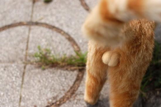 猫好き,フェチ,癒し,猫,ふぐり,画像003