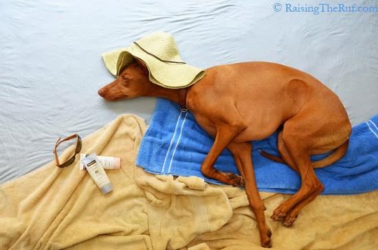 飼い犬,イタズラ,コスプレ,写真,クオリティ,高すぎる,画像003