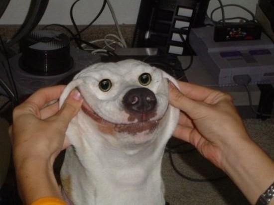 まんまる,お目め,可愛い,犬たち,画像003