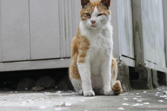 ワイルド,育つ,外猫,画像,003