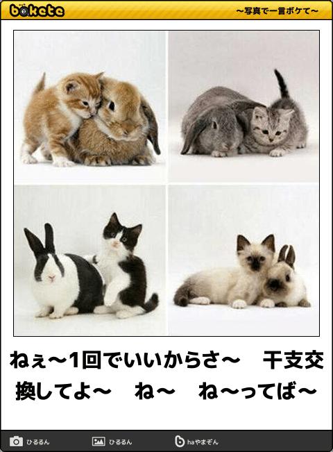 爆笑,可愛く,おもしろい,猫,bokete,画像004