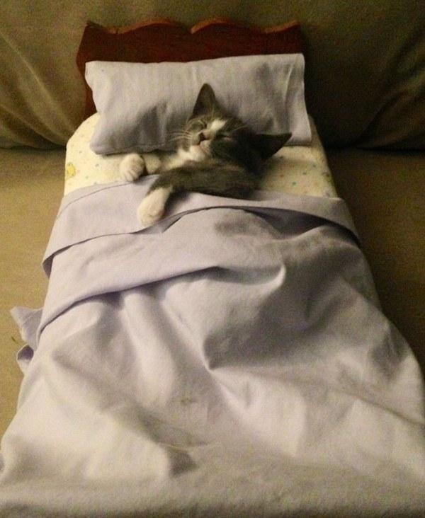 猫,ベッド,画像004