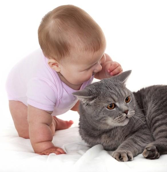 癒されたい,必見,赤ちゃん,猫,仲良し,画像004