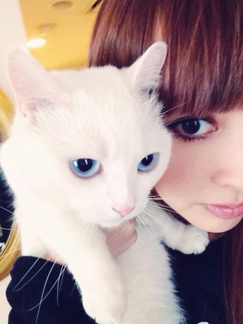 美しい,可愛い,美人飼い主,猫,画像004