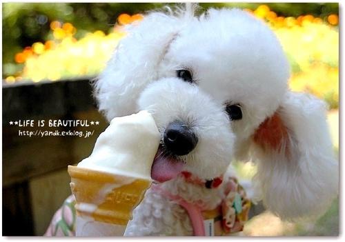 癒し,犬,画像犬004