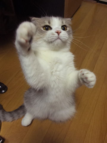 にやけちゃう,可愛い,猫パンチ,画像005