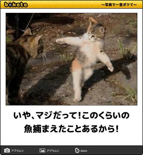 爆笑,可愛く,おもしろい,猫,bokete,画像005