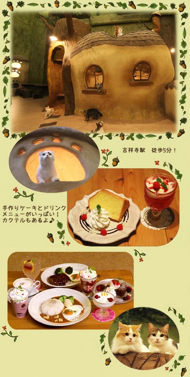 猫カフェ,可愛い,にゃんこ,画像005