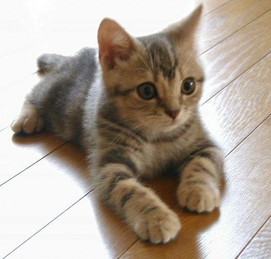 可愛く,子猫,画像006