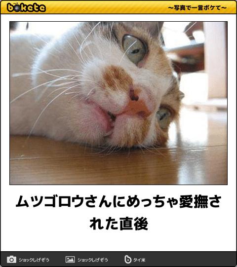 爆笑,可愛く,おもしろい,猫,bokete,画像006
