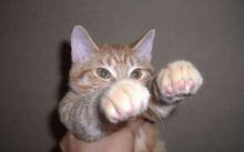 にやけちゃう,可愛い,猫パンチ,画像006