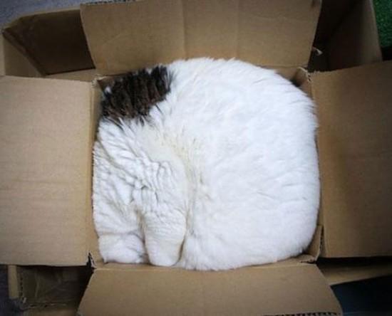 狭い所,大好き,猫,画像006