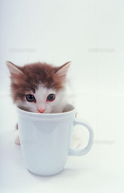 可愛く,コップ,入る,猫,画像006
