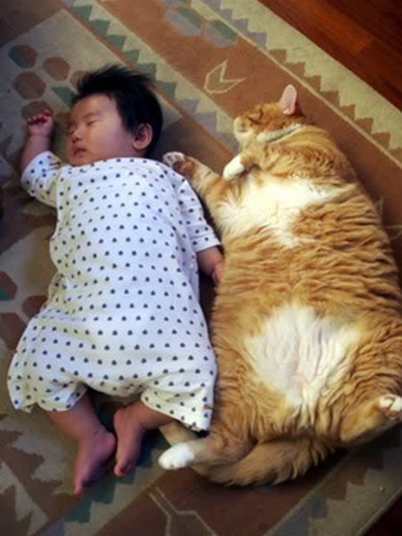 癒されたい,必見,赤ちゃん,猫,仲良し,画像006