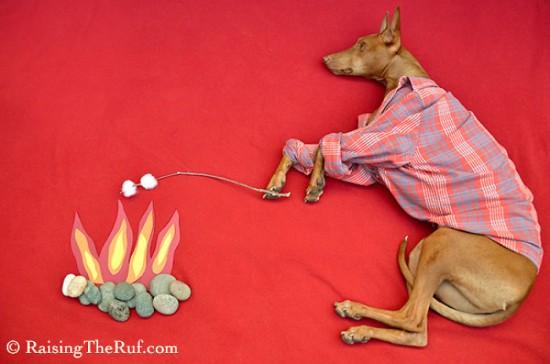 飼い犬,イタズラ,コスプレ,写真,クオリティ,高すぎる,画像006