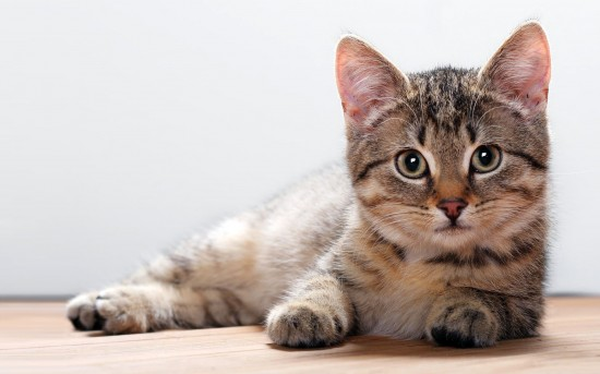 思わず,可愛い,笑った,猫,画像006