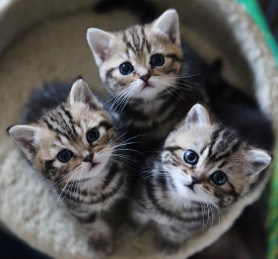 可愛く,子猫,画像007