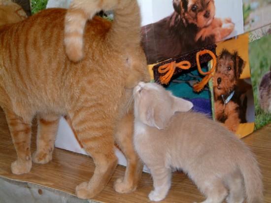 猫好き,フェチ,癒し,猫,ふぐり,画像007
