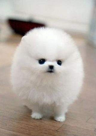 癒し,犬,画像犬007