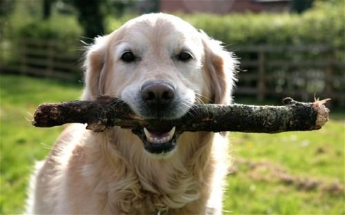 まんまる,お目め,可愛い,犬たち,画像007