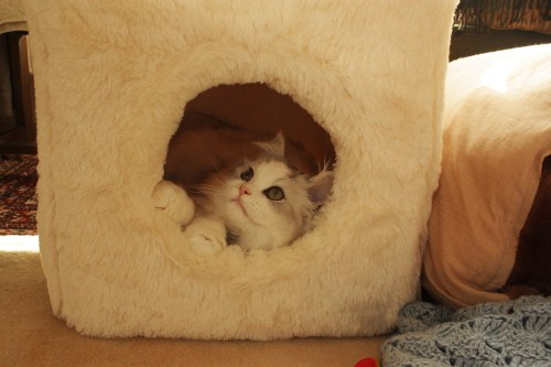 猫,ベッド,画像007
