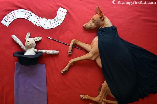 飼い犬,イタズラ,コスプレ,写真,クオリティ,高すぎる,画像008