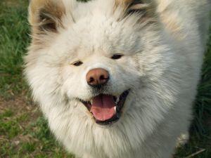 癒し,犬,画像犬008