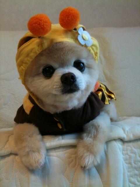 まんまる,お目め,可愛い,犬たち,画像008