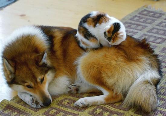 ニヤニヤ,犬,猫,画像008