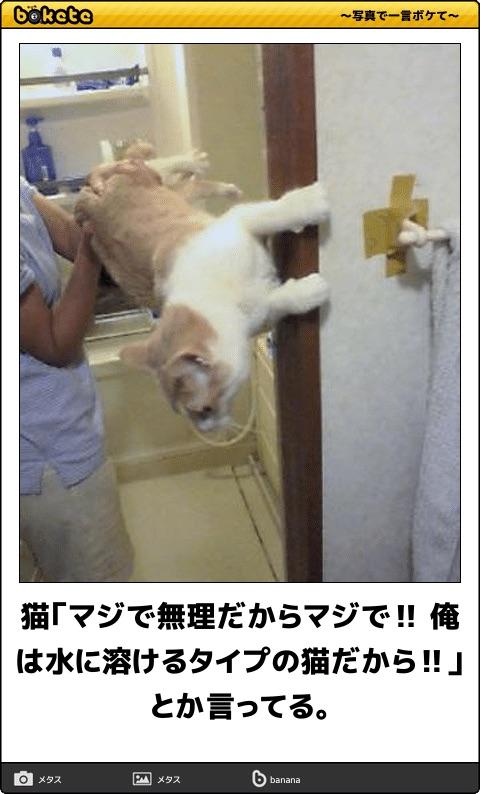 爆笑,可愛く,おもしろい,猫,bokete,画像009