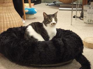 猫,ベッド,画像009
