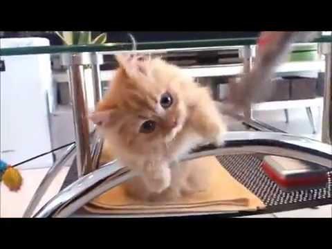 にやけちゃう,可愛い,猫パンチ,画像009