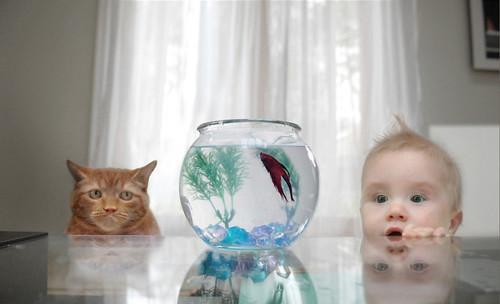 癒されたい,必見,赤ちゃん,猫,仲良し,画像009
