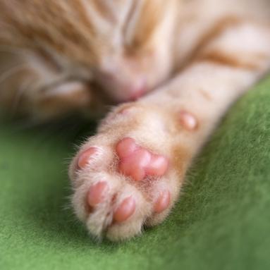 ぷにぷに,猫,肉球,画像009