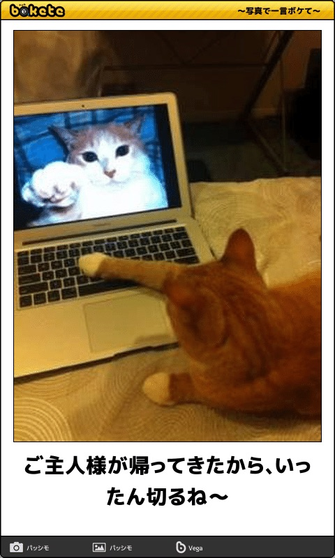 爆笑,可愛く,おもしろい,猫,bokete,画像010