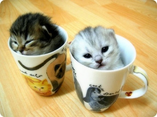 可愛く,コップ,入る,猫,画像010