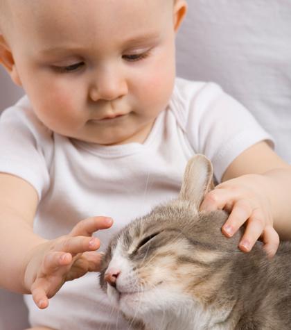 癒されたい,必見,赤ちゃん,猫,仲良し,画像010