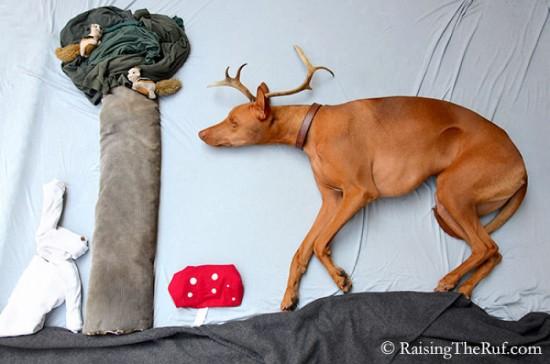 飼い犬,イタズラ,コスプレ,写真,クオリティ,高すぎる,画像010