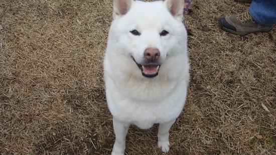 癒される,癒し犬,画像010