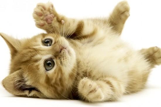 思わず,可愛い,笑った,猫,画像010