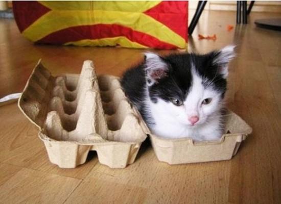 狭い所,大好き,猫,画像011