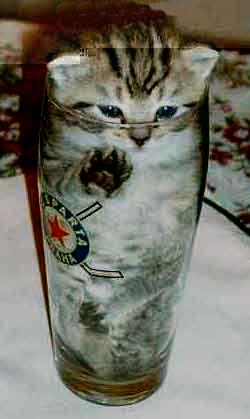 可愛く,コップ,入る,猫,画像011