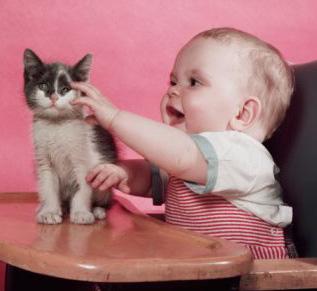 癒されたい,必見,赤ちゃん,猫,仲良し,画像011