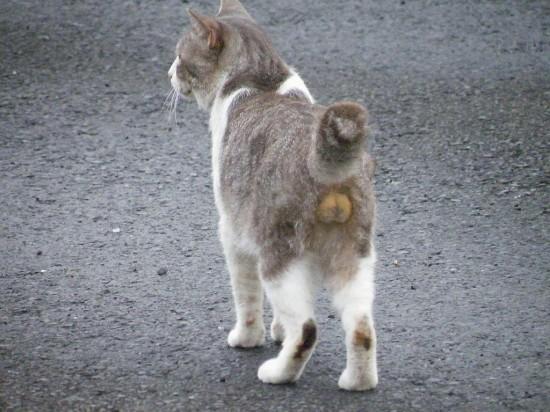 猫好き,フェチ,癒し,猫,ふぐり,画像011