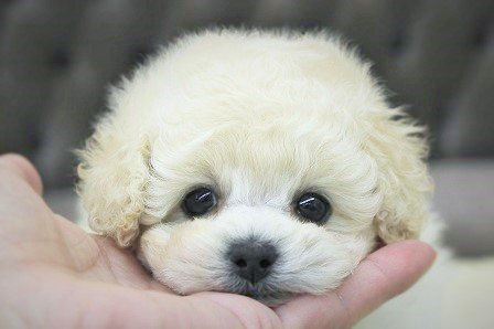 ぶちゃ,可愛い,鼻ぺちゃ,犬,猫,画像,ぶさ可愛い011